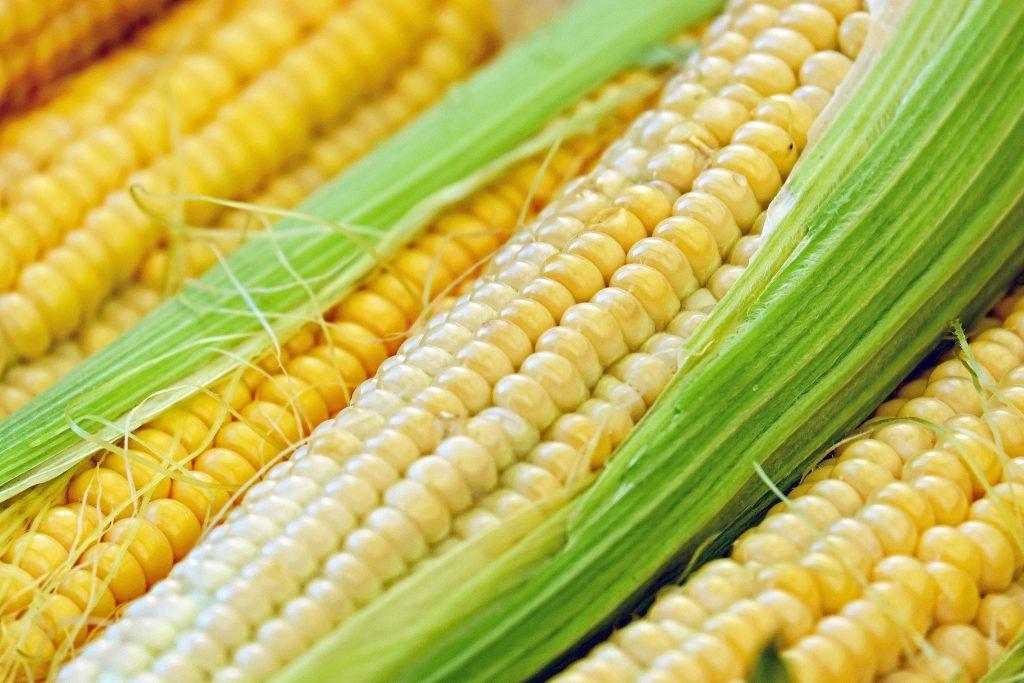 corn-1605664